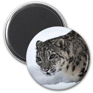 Snow Leopard 6 Cm Round Magnet
