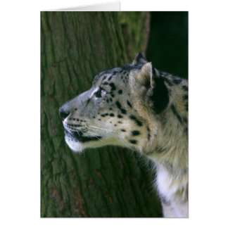 Snow leopard beautiful photo blank greeting card