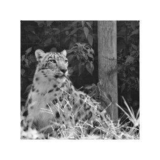 Snow Leopard Black and White Print Canvas Prints