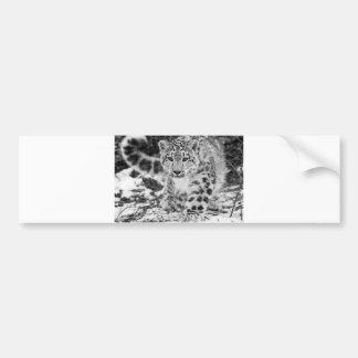 Snow Leopard Bumper Sticker