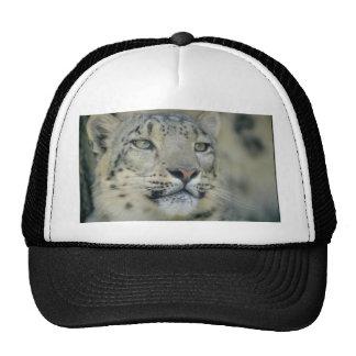 snow leopard cap