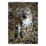 Snow Leopard - Christmas Card