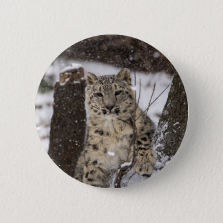 Snow Leopard Cub 6 Cm Round Badge