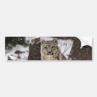 Snow Leopard Cub Bumper Sticker
