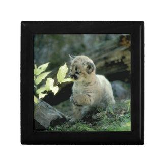 Snow Leopard Cub Gift Box
