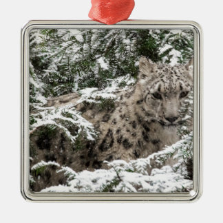 Snow Leopard Cub Hiding Christmas Ornament