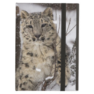 Snow Leopard Cub iPad Air Case
