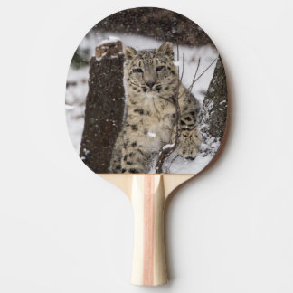 Snow Leopard Cub Ping Pong Paddle