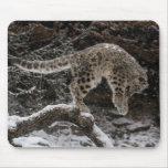Snow Leopard Cub Pounce Mouse Pads