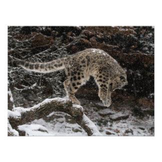 Snow Leopard Cub Pounce Art Photo