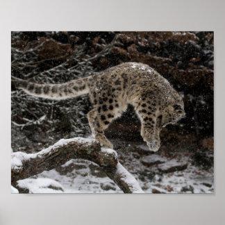 Snow Leopard Cub Pounce Poster