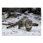 Snow Leopard Cub Stalking Birds Card