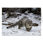 Snow Leopard Cub Stalking Birds Greeting Card
