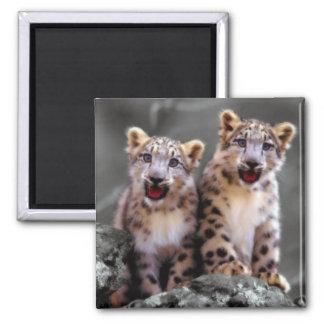 Snow Leopard Cubs Square Magnet