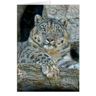 Snow Leopard Following Eyes Greeting Cards