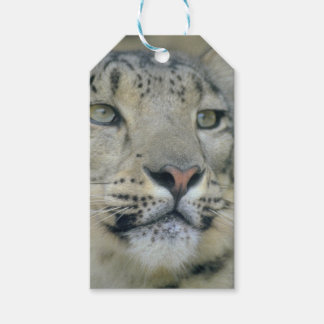 snow leopard gift tags
