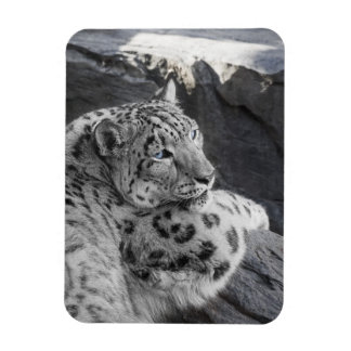 Snow Leopard Icy Stare Rectangular Photo Magnet