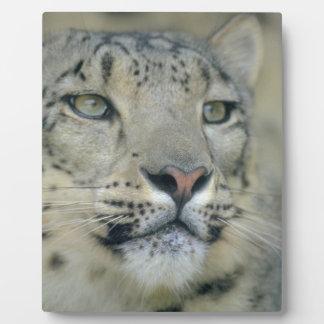 snow leopard plaque