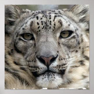 Snow Leopard Print