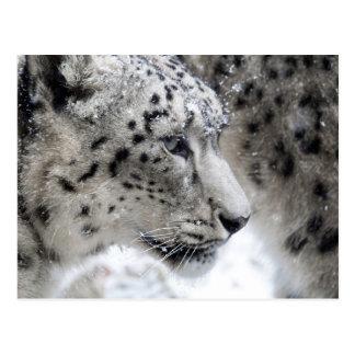 Snow Leopard Profile Portrait Postcard