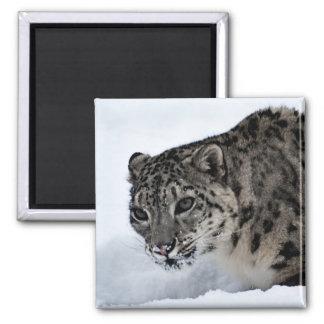 Snow Leopard Square Magnet
