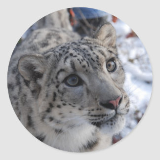 snow leopard stickers