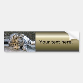 Snow Leopard the Starring Feline Cat Bumper Sticker