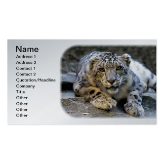 Snow Leopard the Starring Feline Cat Pack Of Standard Business Cards