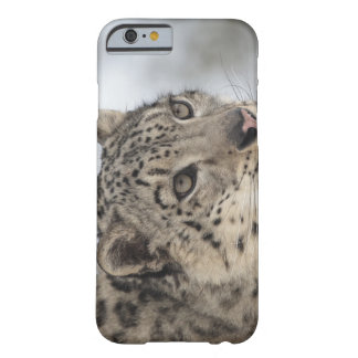 Snow leopard (Uncia uncia) 2 Barely There iPhone 6 Case