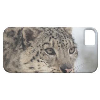 Snow leopard (Uncia uncia) 2 iPhone 5 Cover