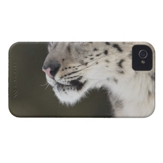 Snow leopard (Uncia uncia) iPhone 4 Cover