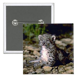 Snow leopard, young cub 15 cm square badge