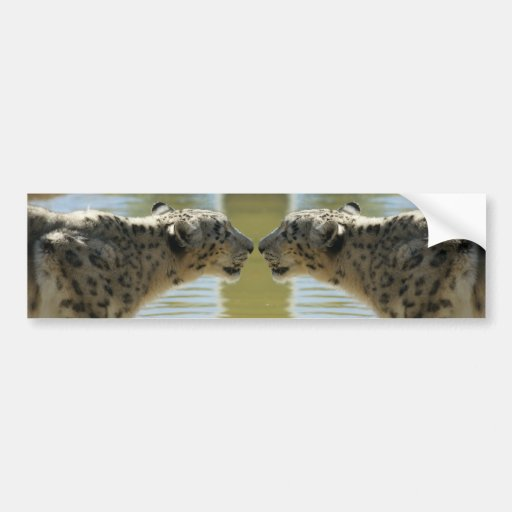 SNOW LEOPARDS FACE OFF BUMPER STICKERS