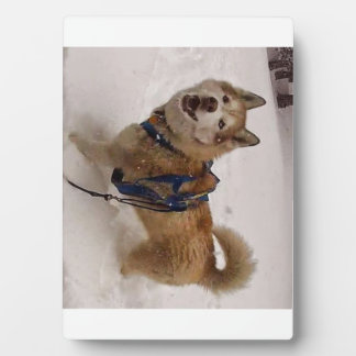 Snow Max w/ Easel (5x7) Plaque
