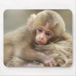 Snow Monkey Baby, Jigokudani, Nagano, Japan 2 Mouse Pad