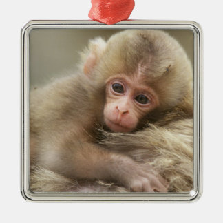 Snow Monkey Baby, Jigokudani, Nagano, Japan 2 Silver-Colored Square Decoration