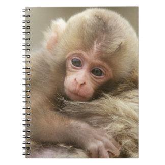 Snow Monkey Baby, Jigokudani, Nagano, Japan 2 Spiral Notebook