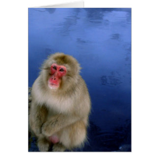Snow Monkey Card