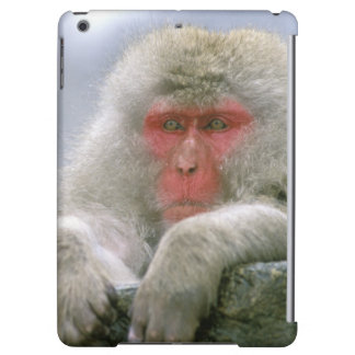 Snow Monkey Couple, Japanese Macaque,