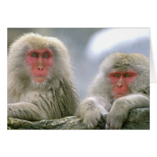 Snow Monkey Couple, Japanese Macaque, Card
