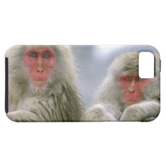 Snow Monkey Couple, Japanese Macaque, iPhone 5 Cases