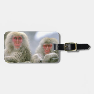 Snow Monkey Couple, Japanese Macaque, Luggage Tag