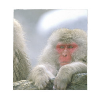 Snow Monkey Couple, Japanese Macaque, Notepad