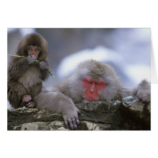 Snow Monkey Mother & Child, Jigokudani, Nagano, Card
