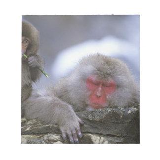 Snow Monkey Mother & Child, Jigokudani, Nagano, Notepad