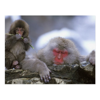 Snow Monkey Mother & Child, Jigokudani, Nagano, Postcard