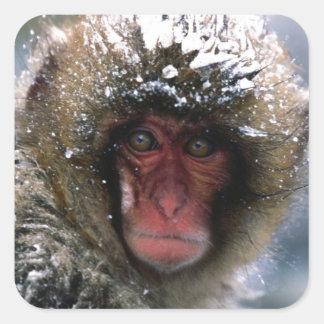 Snow Monkey Square Sticker