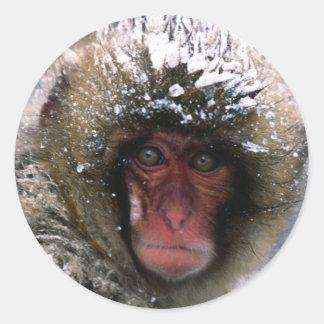 Snow Monkey Stickers