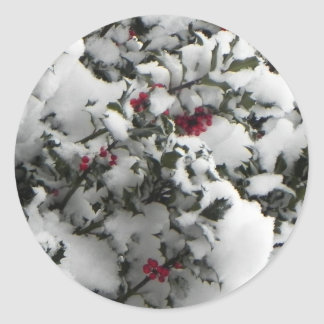 Snow on a holly bush classic round sticker