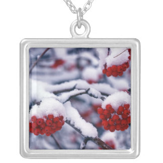 Snow on European Mountain Ash Berries, Utah. Square Pendant Necklace